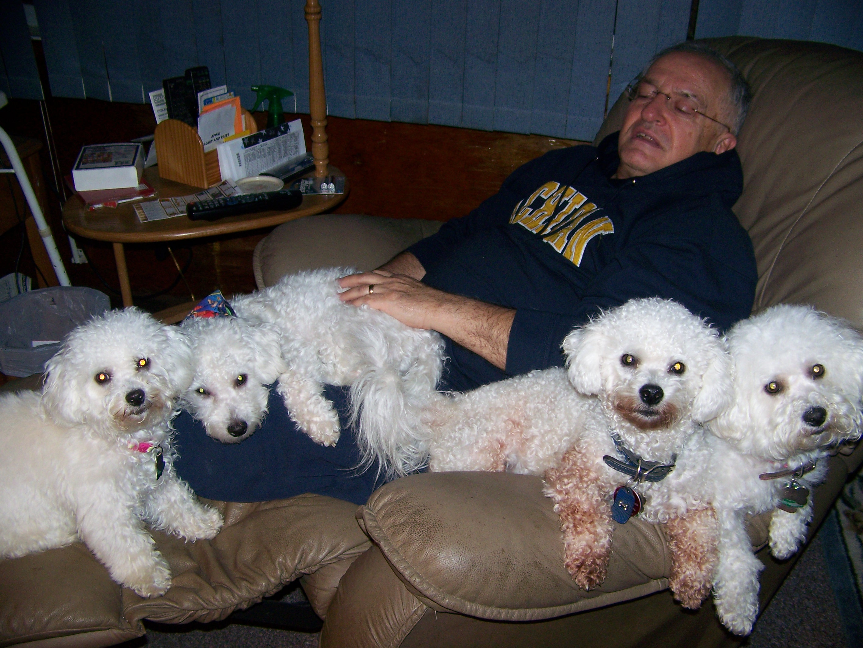 Ron & a bunch of dogs