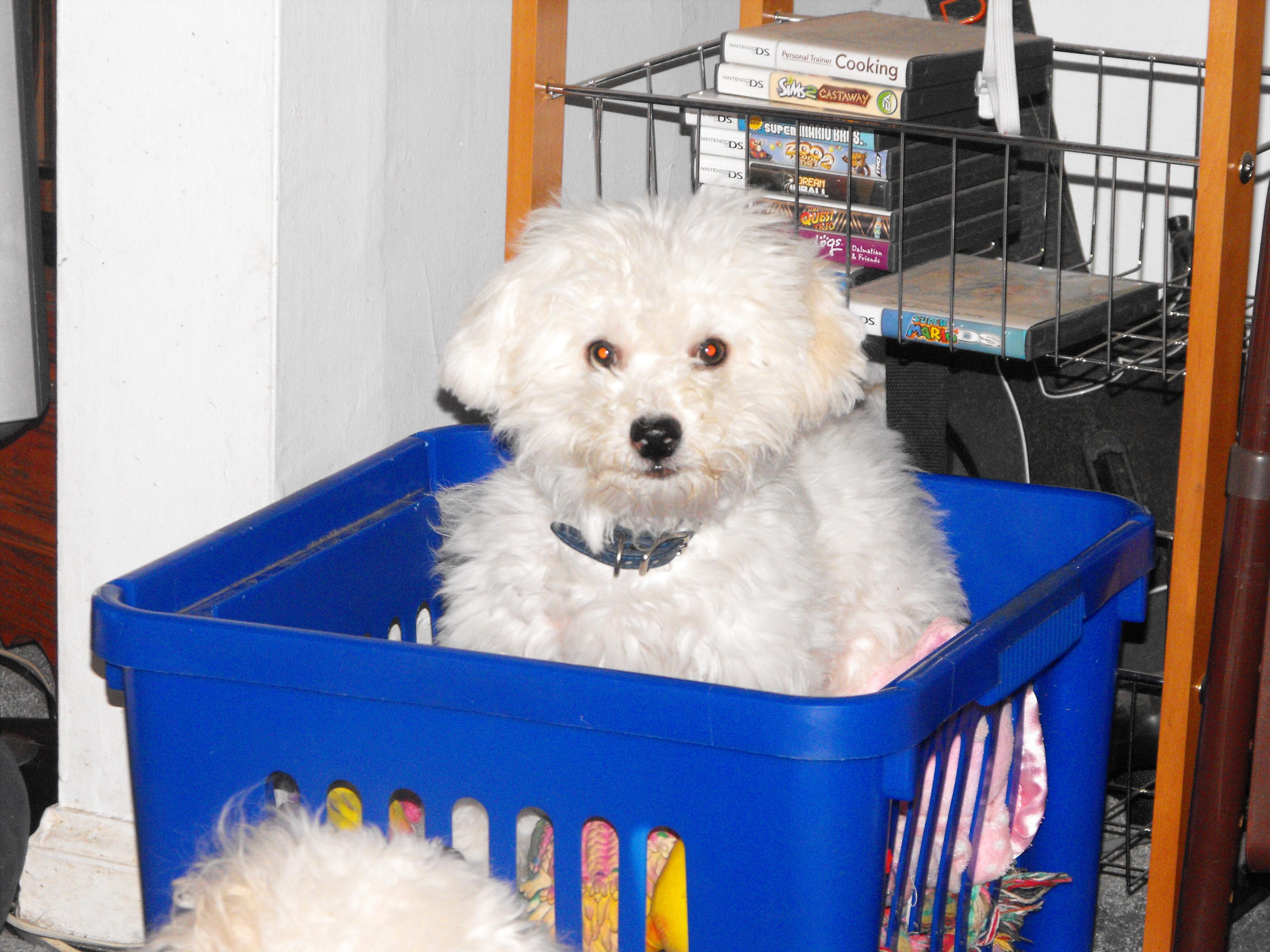 Puppy in toybox