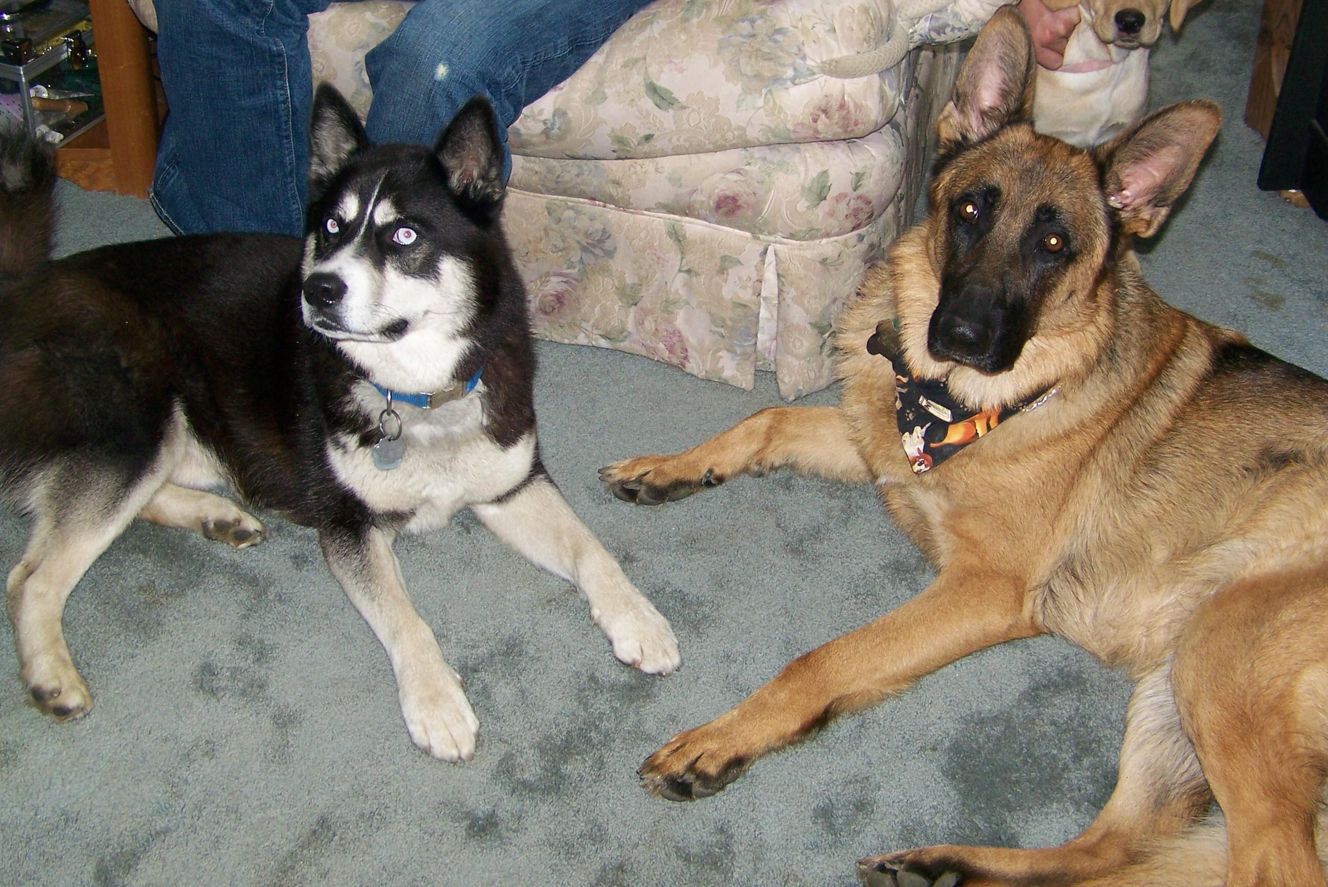 Samson & Kaihn
