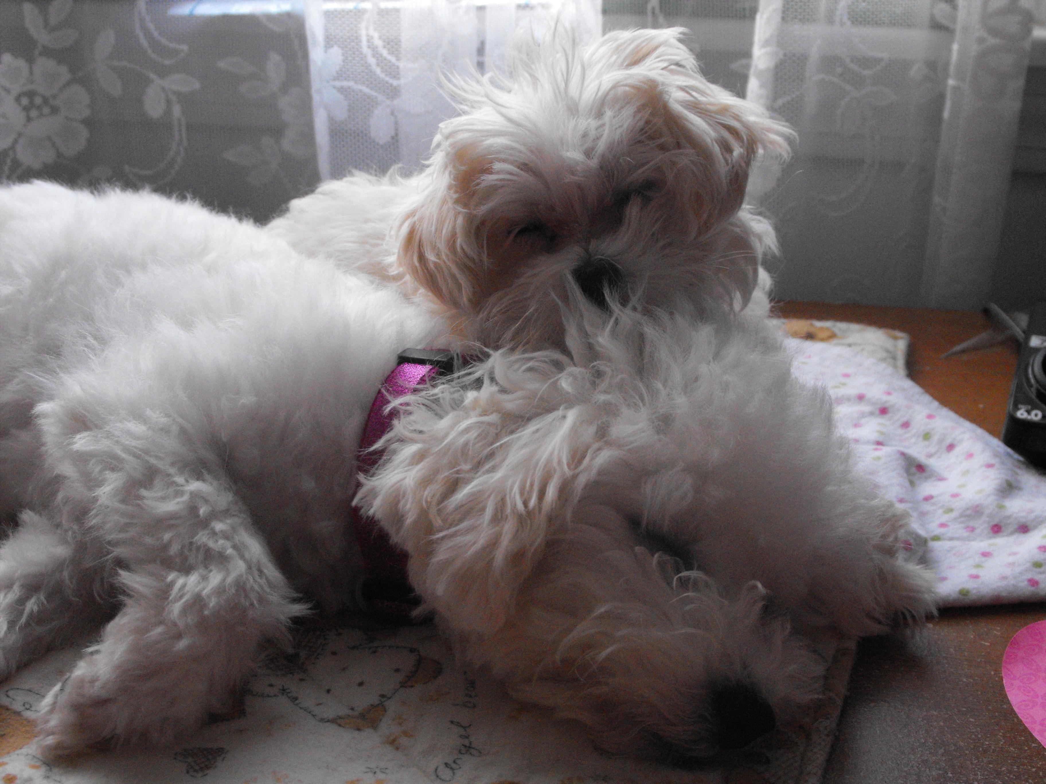 Shiloh & Lily