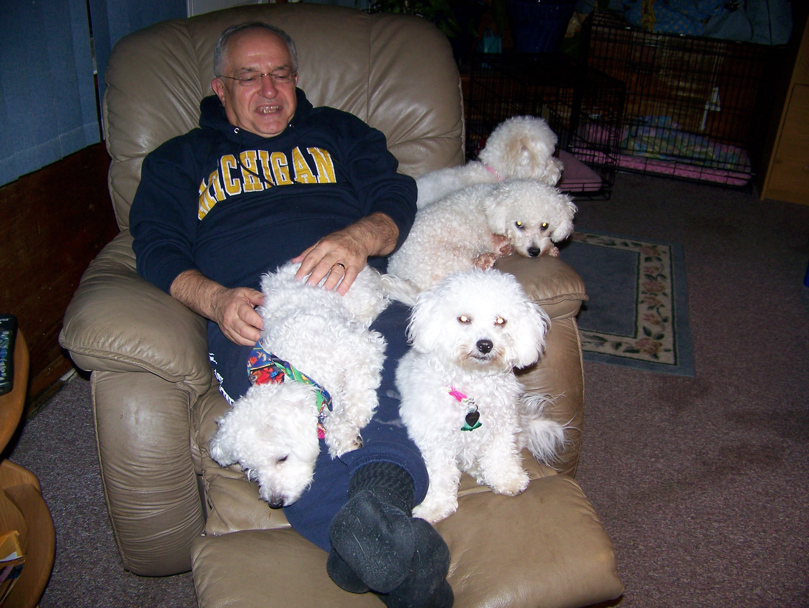 Ron covered in Bichons