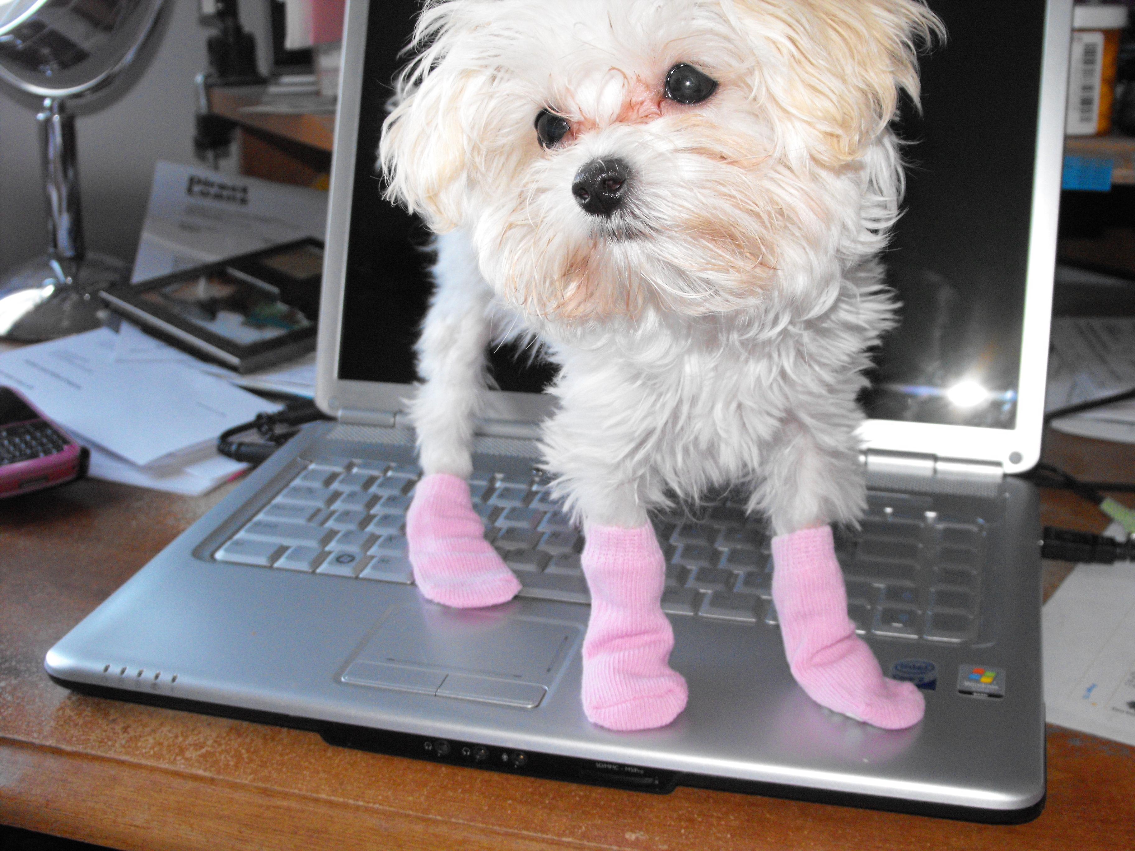 Shiloh in her new socks