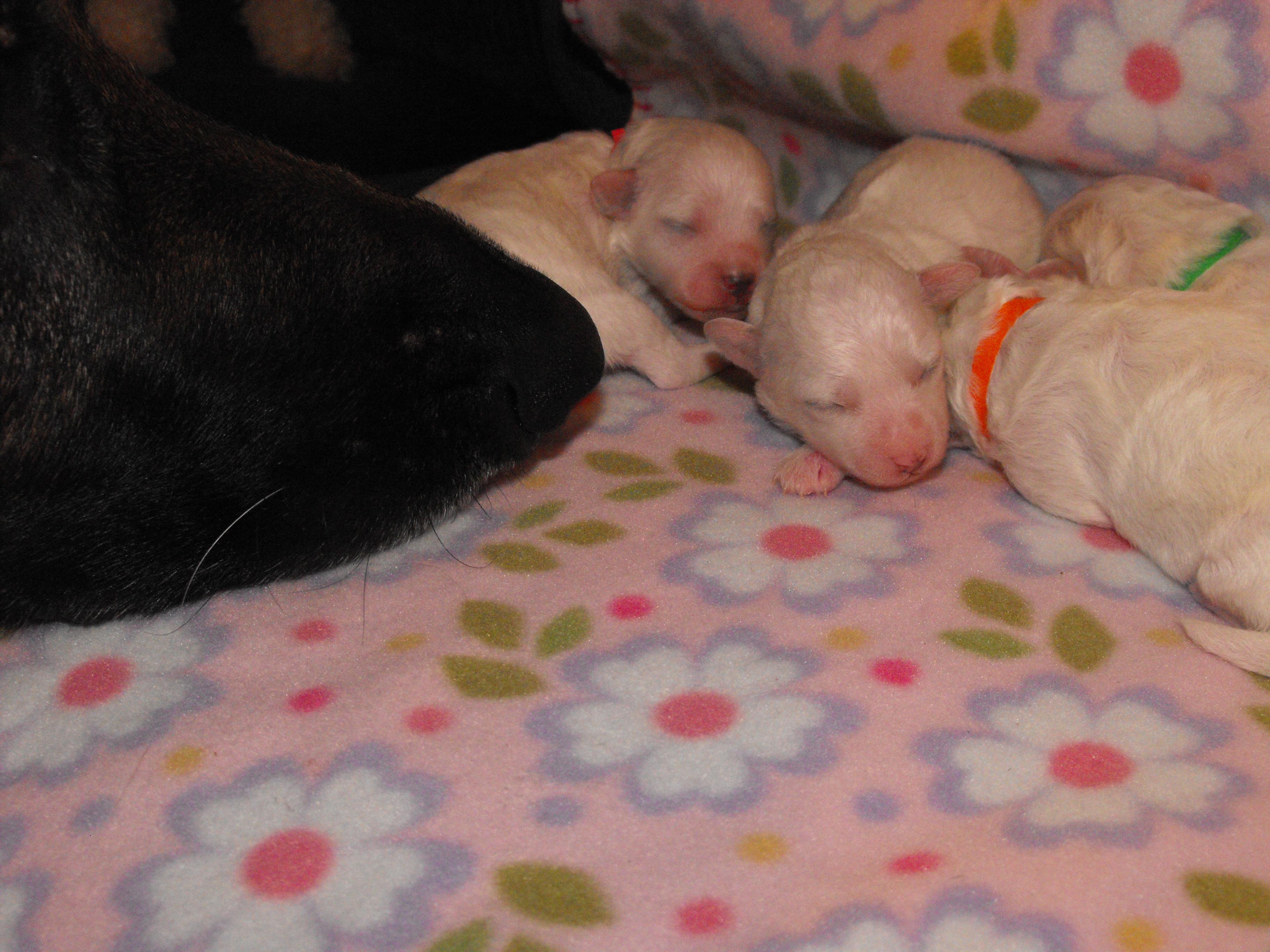 Sam's nose & pups